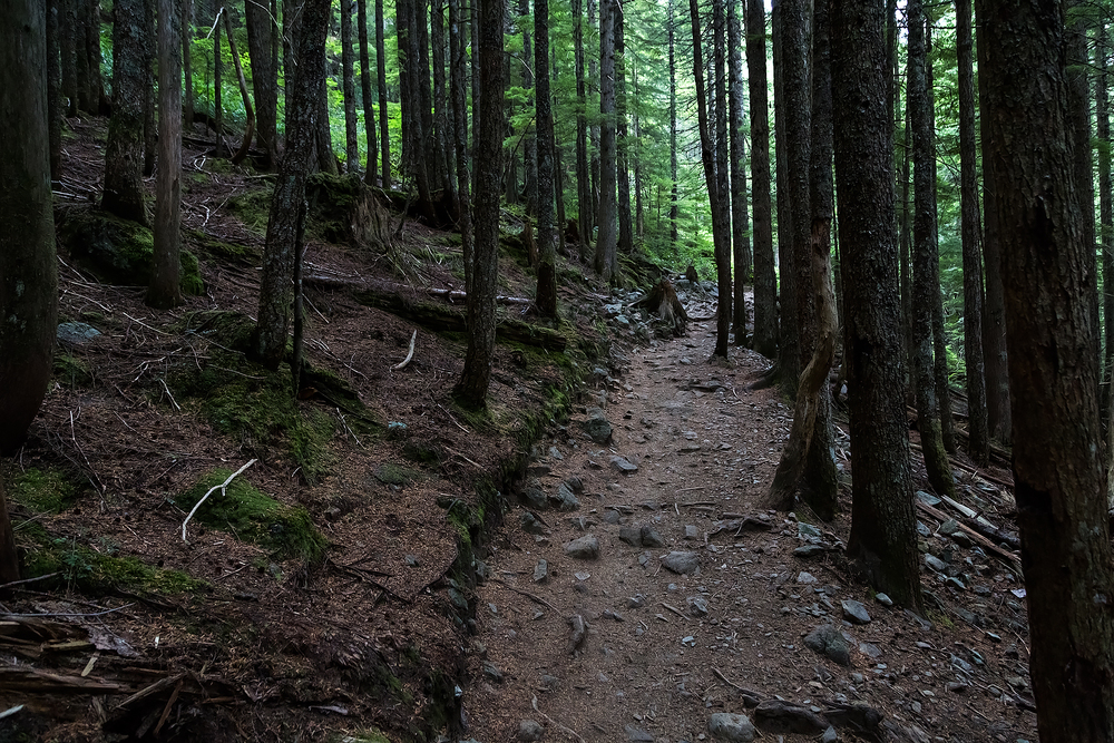 Trail near the top of Mount Si.