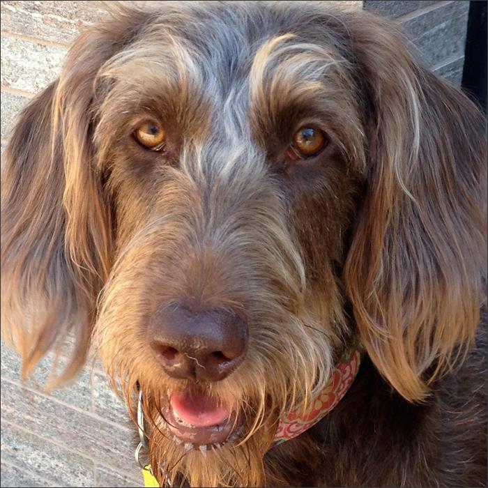 DOGS5415Abby.jpg