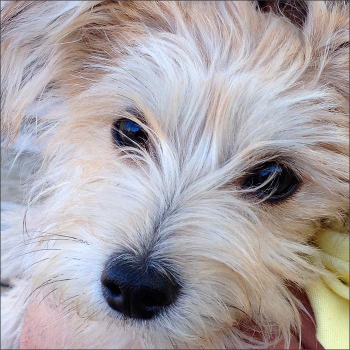 DOGS5415Charley.jpg