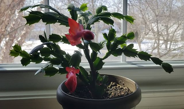 #wintercatus #bloom #winterbeauty #floweringcatus  #MaryMarshall  #theparanormalmd #theparanormalmdradio #paranormalresearcher #paranormalauthor #paranormaleducator #paranormalinvestigator #lecturers #author #Continuumbook #psychic #medium #ghosts #lightanomaly #multipledimensions #paralleluniverse #evp #fortean #cryptozoology #poltergeist #shadowpeople #spirits #paranormal