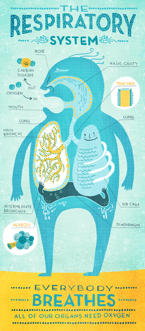 Delightful works of illustrative body systems by Rachel Ignotofsky.