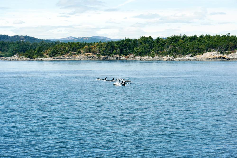 AlaskaAdventure-92.jpg