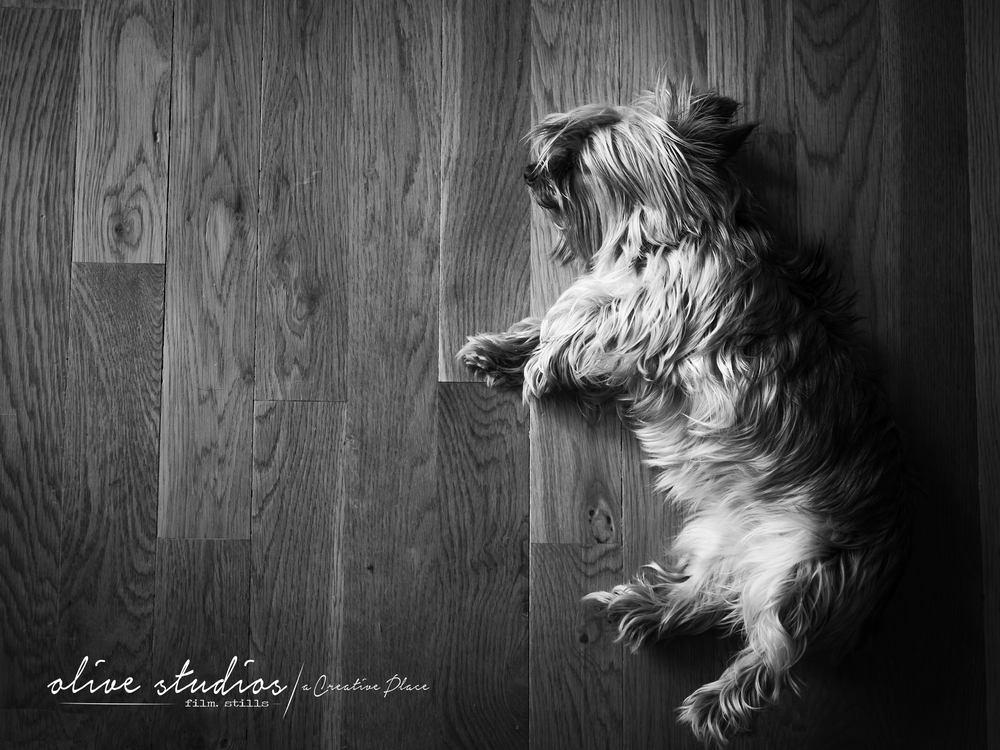 dogs-8.jpg