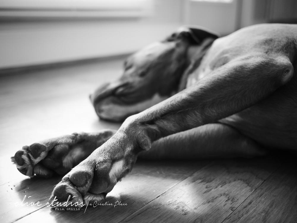 dogs-12.jpg