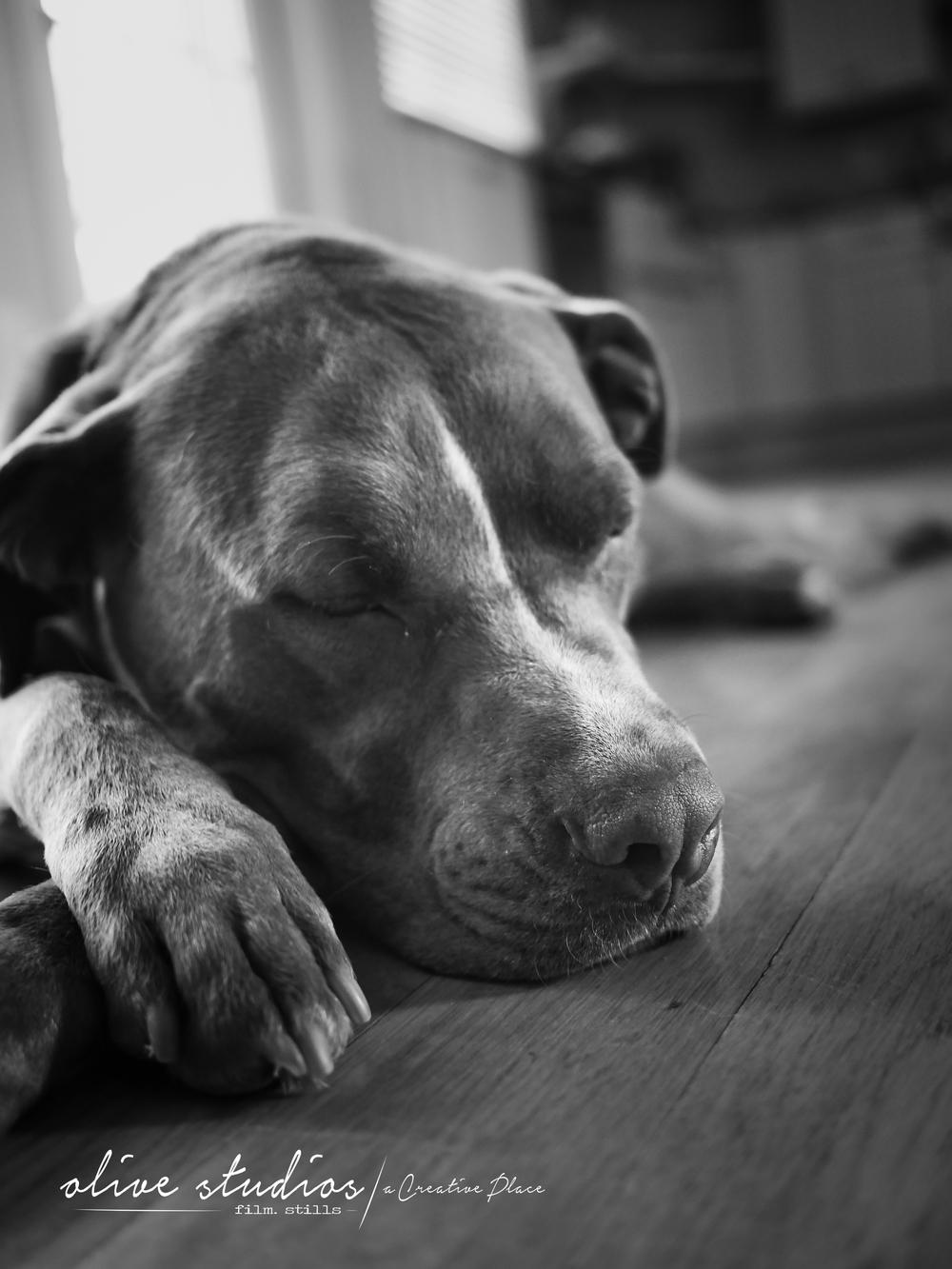 dogs-18.jpg