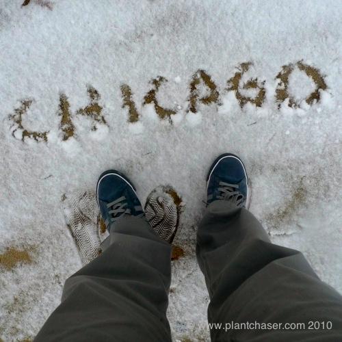 chicago-plants-3.jpg