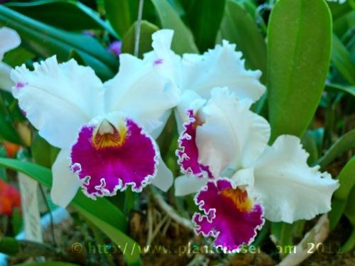 orchid-species-1.jpg
