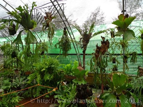 horticulture-2011-11.jpg