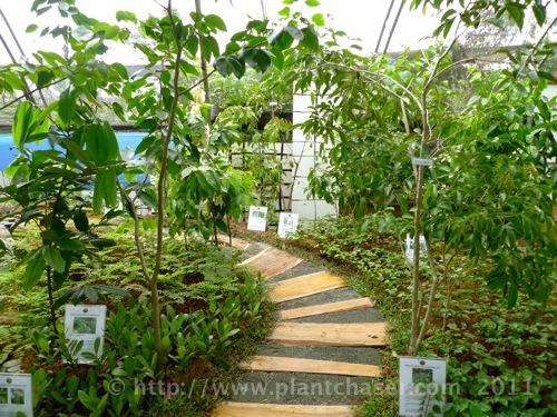 horticulture-2011-6.jpg