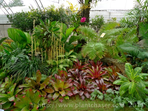 Urban Gardens Plant Chaser
