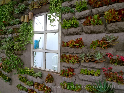 horticulture-2011-5.jpg