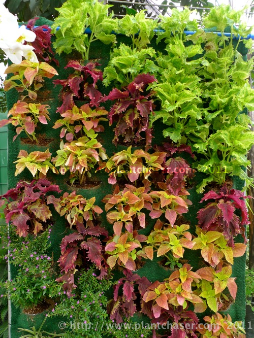 horticulture-2011-1.jpg