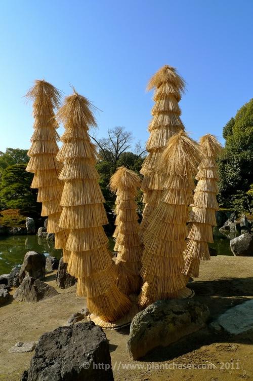 kyoto-nijo-ninomaru-4.jpg