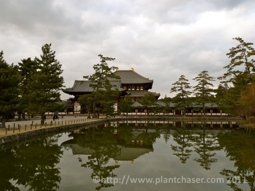 japan-todai-ji-nara-4.jpg