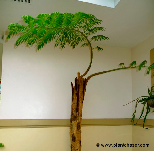 tree-fern-noid-1.jpg