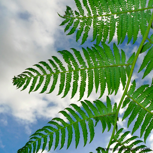 tree-fern-noid-7.jpg