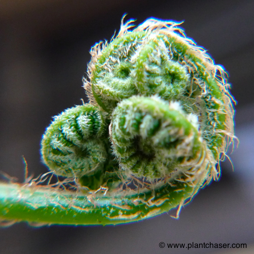 tree-fern-noid-4.jpg