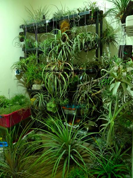 plant-evacuation-2.jpg
