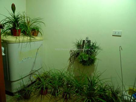 plant-evacuation-3.jpg