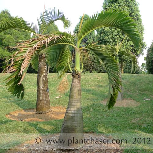 taman-botani-putrajaya-365.jpg