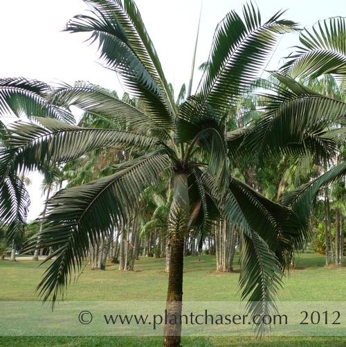 taman-botani-putrajaya-367.jpg
