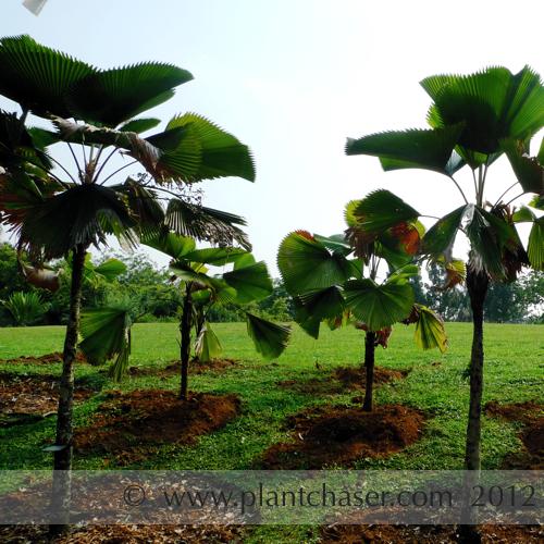 taman-botani-putrajaya-364.jpg