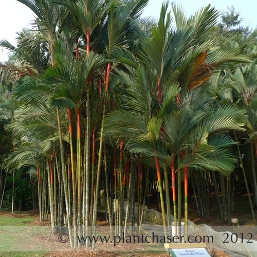 taman-botani-putrajaya-379.jpg