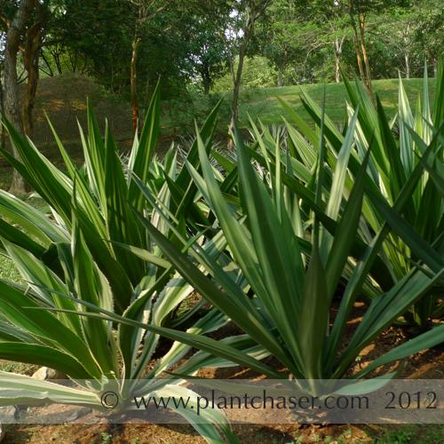 taman-botani-putrajaya-369.jpg