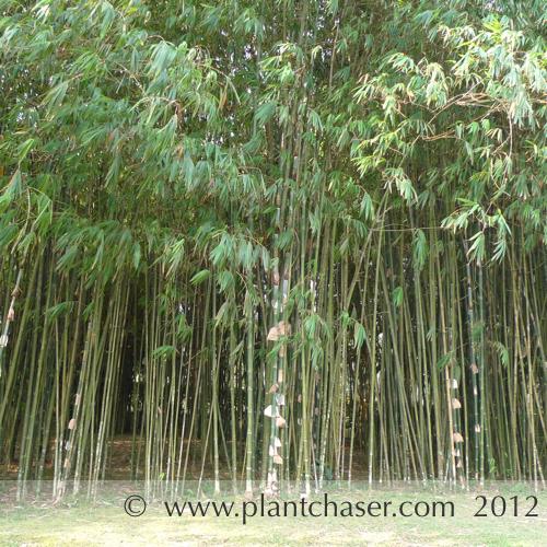 taman-botani-putrajaya-374.jpg