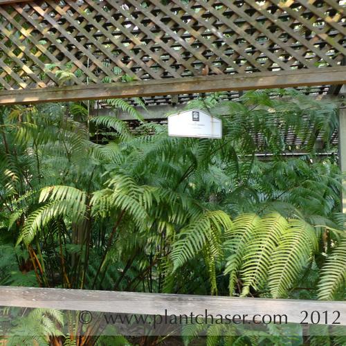 taman-botani-putrajaya-361.jpg