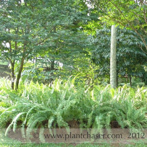 taman-botani-putrajaya-359.jpg