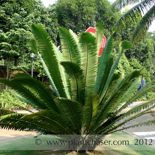 taman-botani-putrajaya-352.jpg