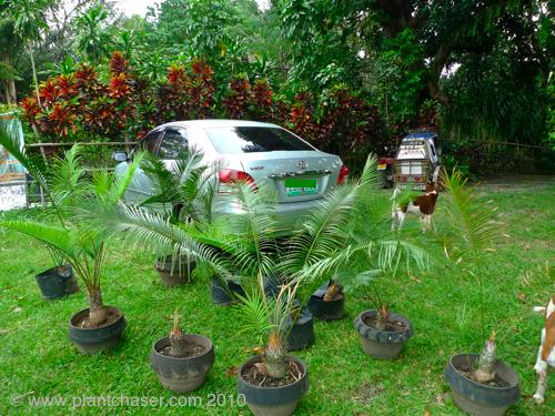 plant-chase-95.jpg