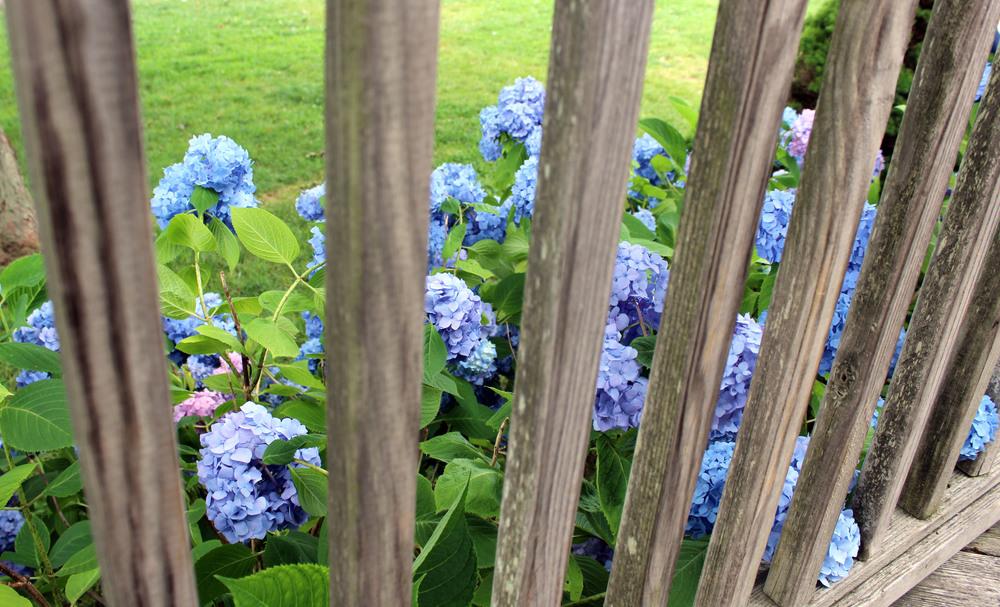 flowers fence.jpg