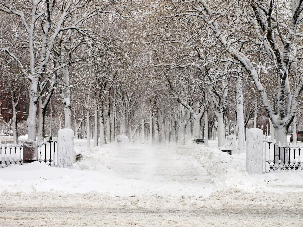 snowy boston.jpg