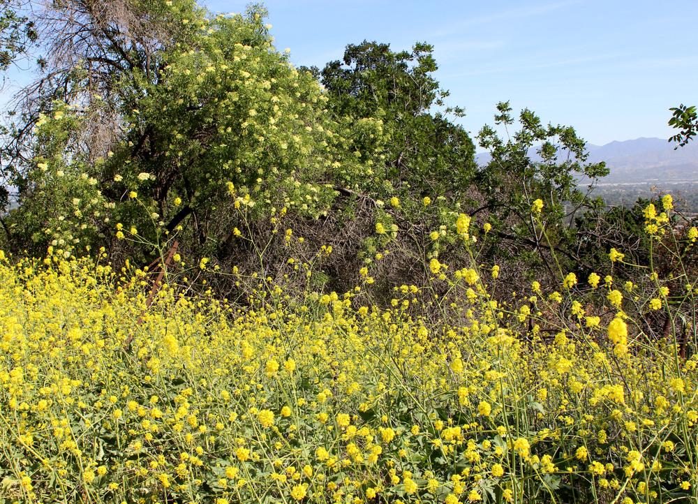 yelllow flowers.jpg