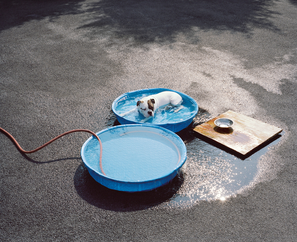 DOG-POOL(drum).jpg