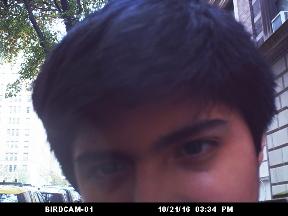 BIRDCAM00002 copy.jpg