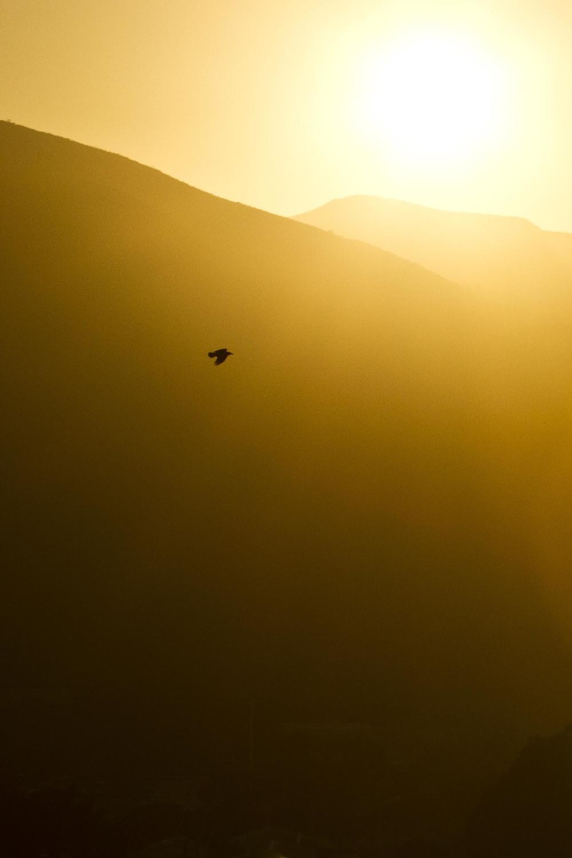 crows-1.jpg