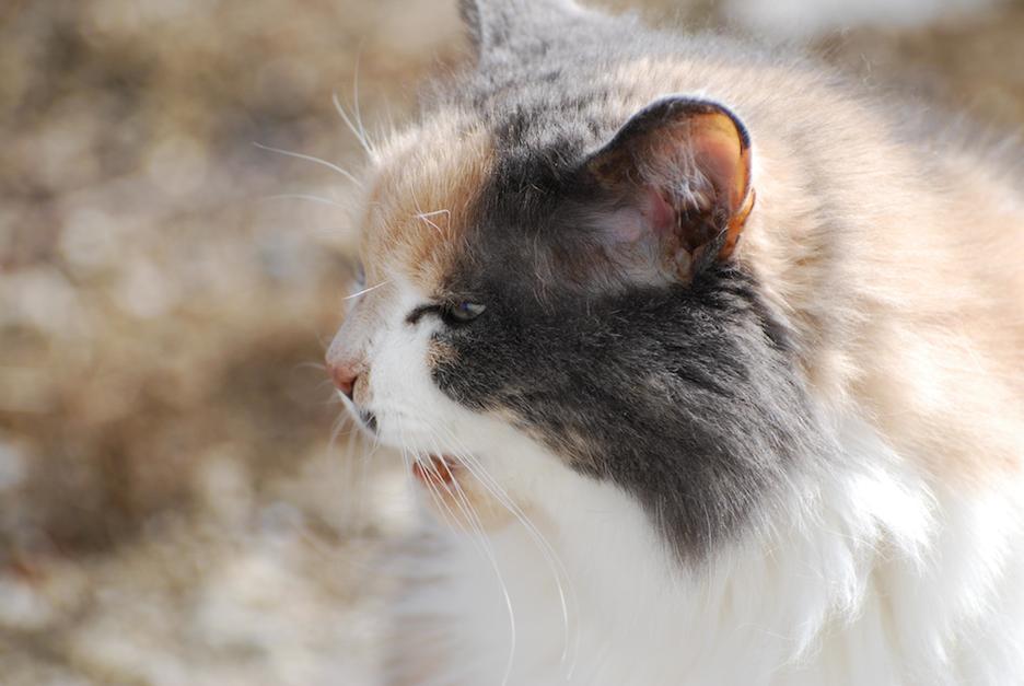 ghost cat.JPG