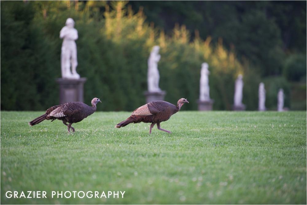 Crane-Estate-Wedding-Grazier-Photography_0023-2.jpg