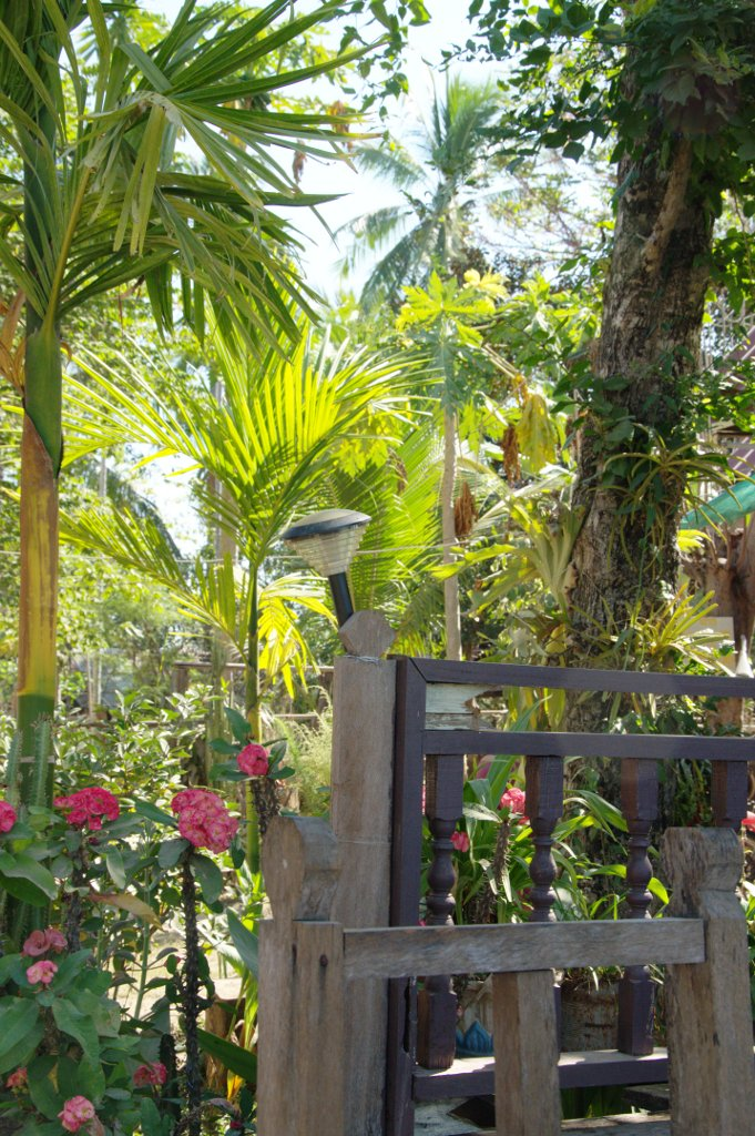 Tropical garden setting.