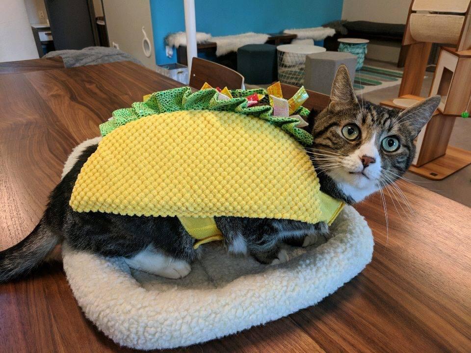 New Taco