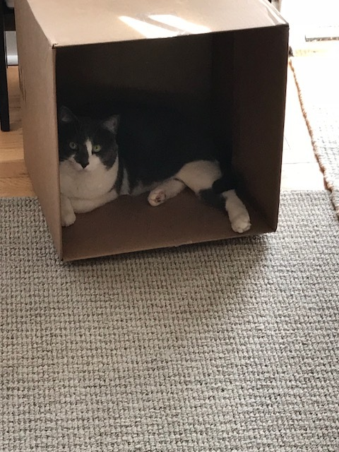 Faust-In-The-Box