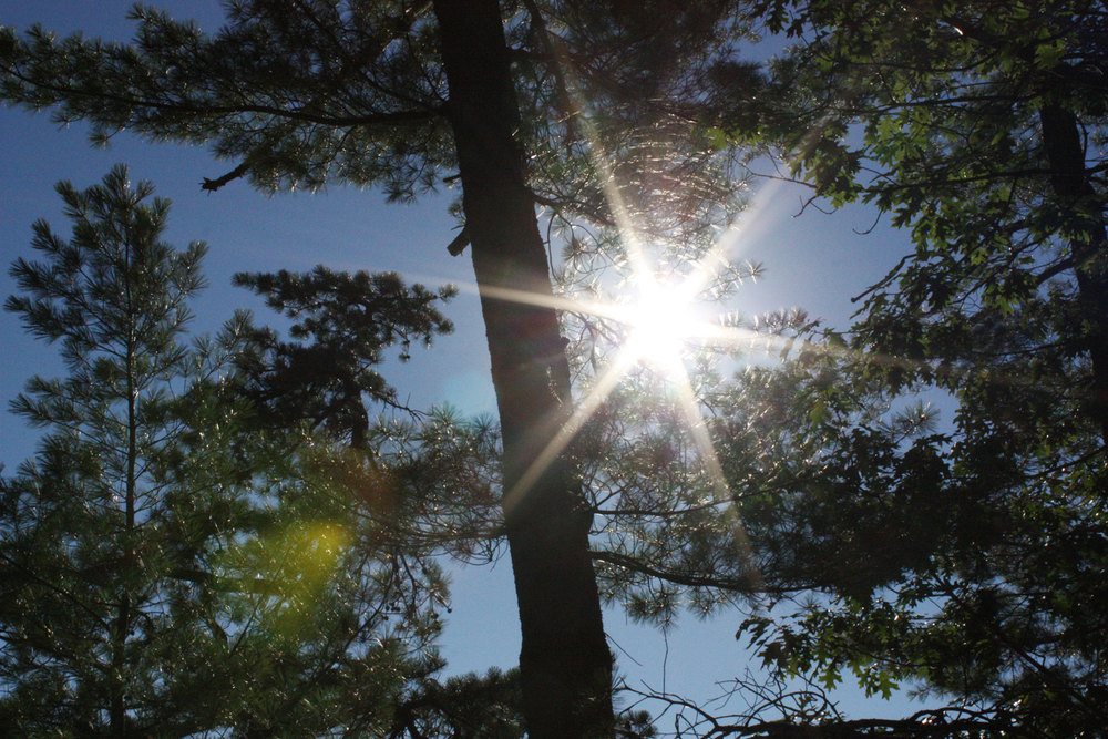 Light through the pines on a lazy August afternoon.