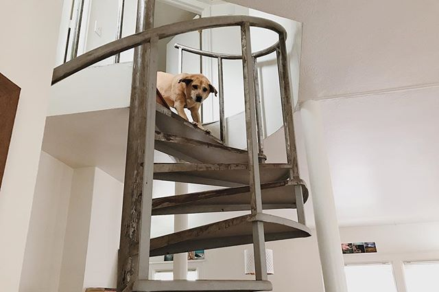 Not. A. Fan. . 🐶🇺🇸 #spiralstaircase #nothankyou