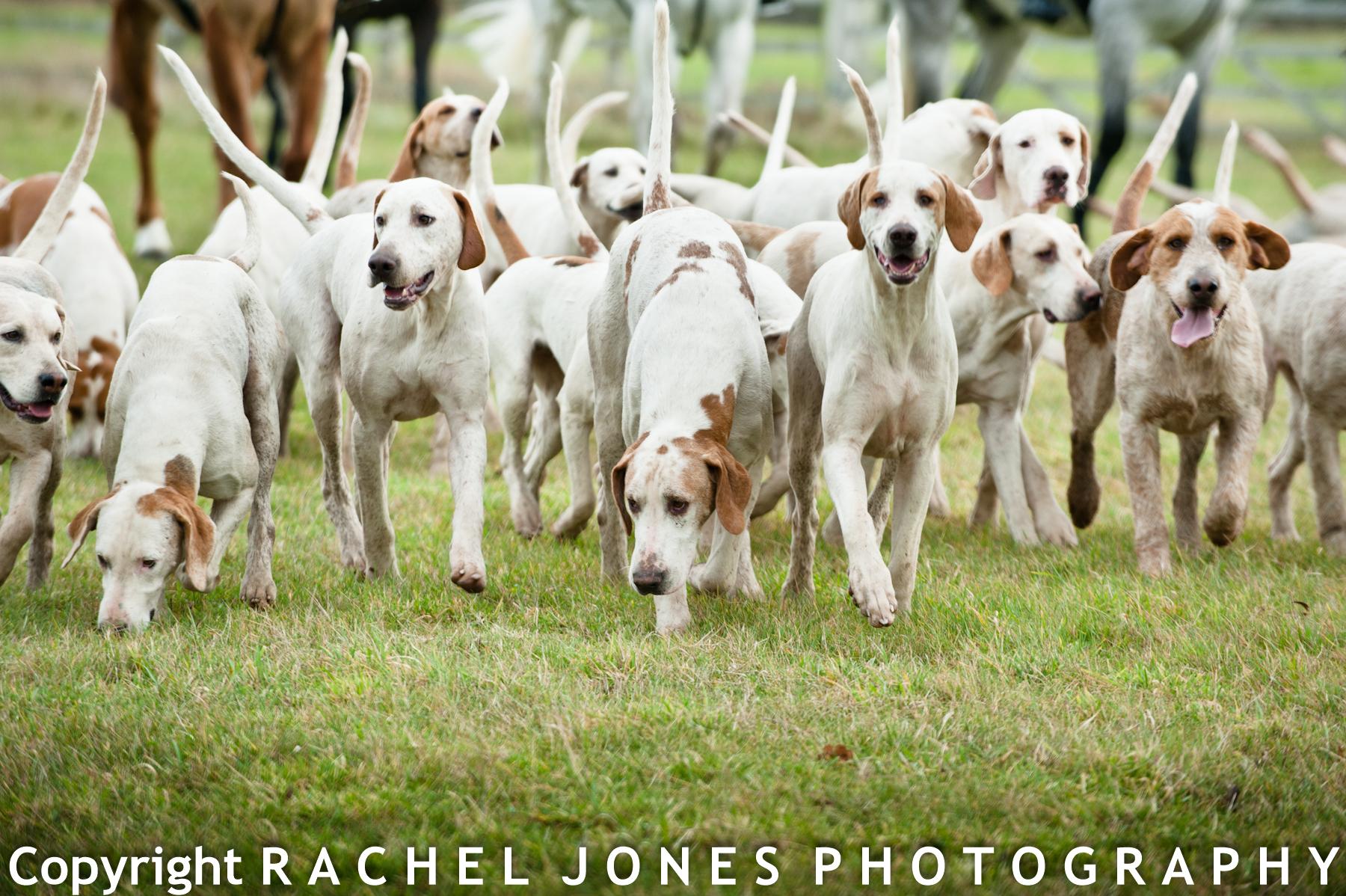 Hunt 12 Dec 13-15