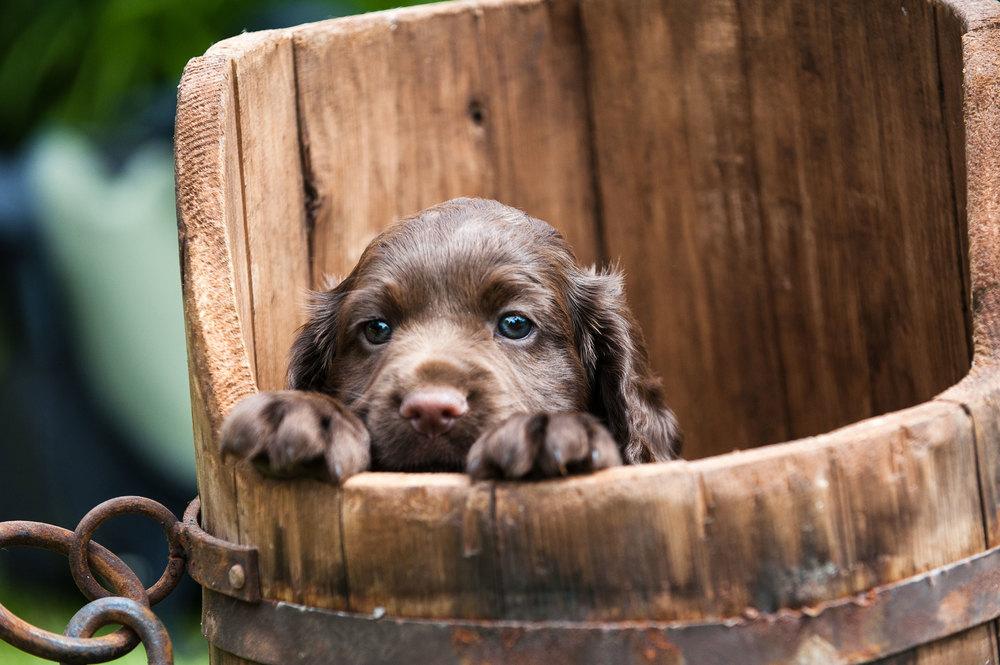Puppies-14a.jpg