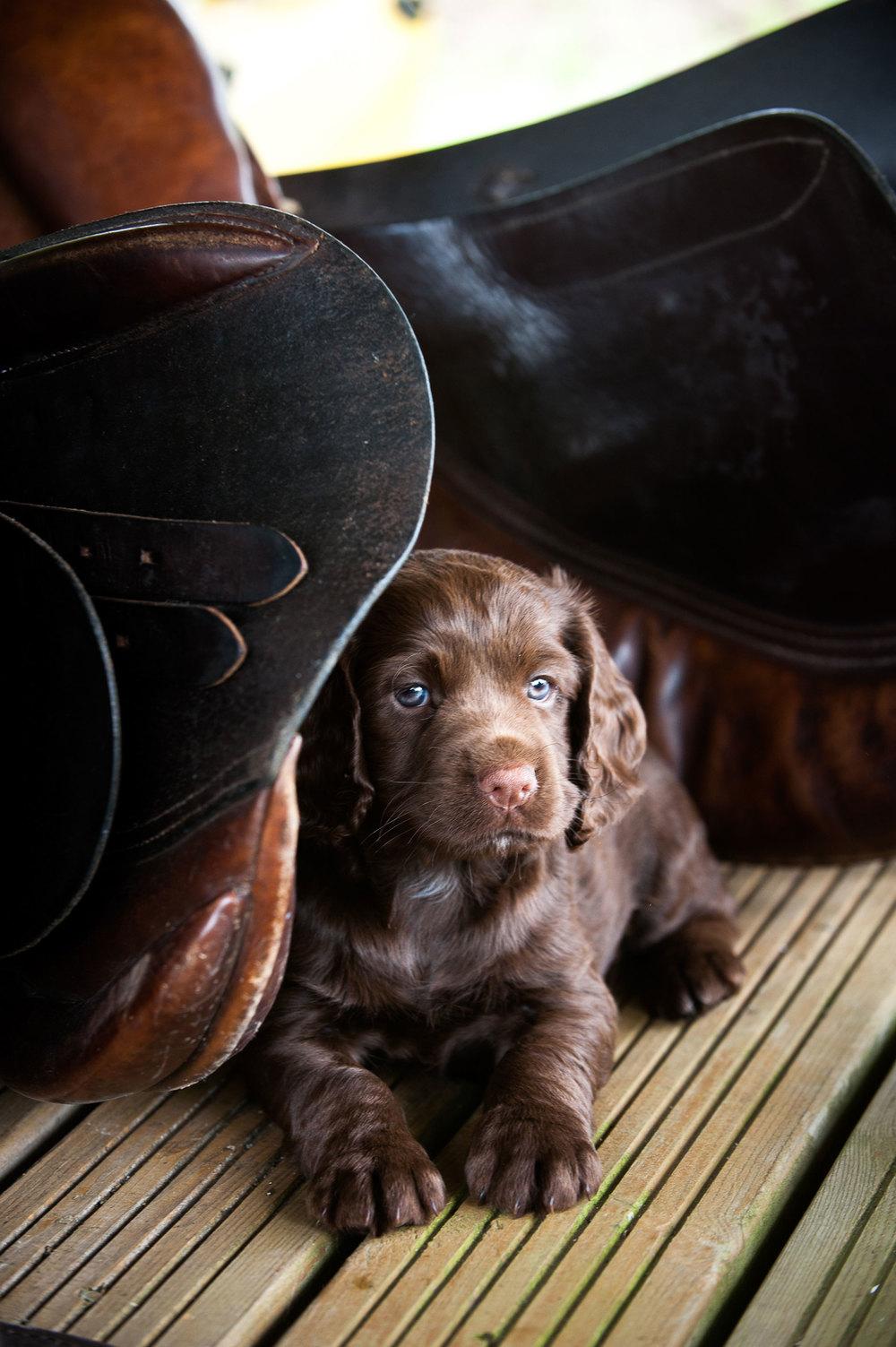 Puppies-53a.jpg