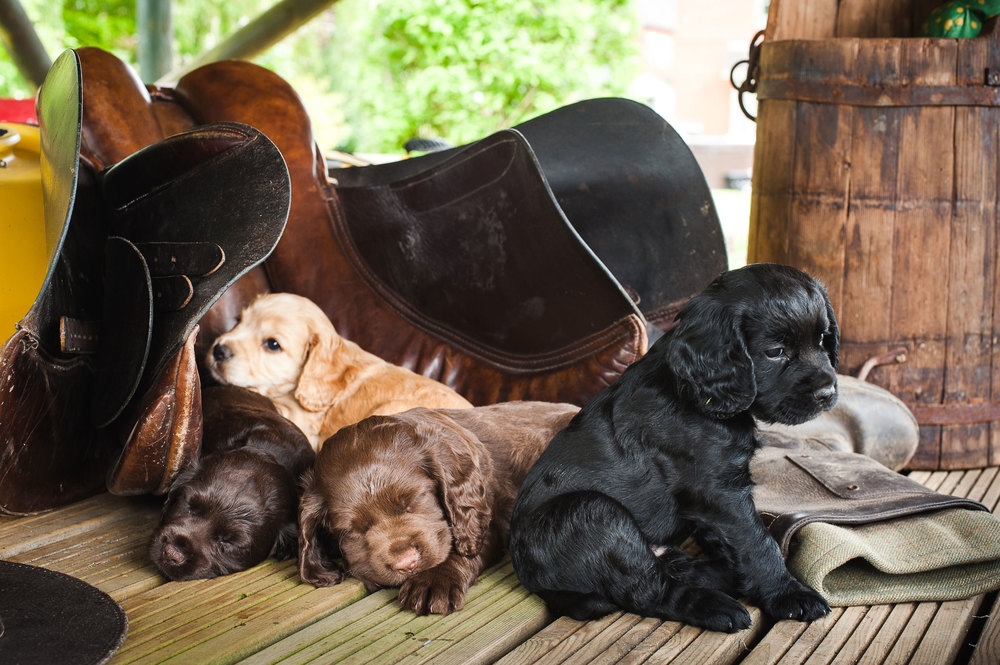 Puppies-70a.jpg